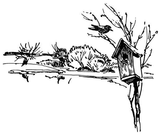 Картинки к рассказу белова скворцы рисунок карандашом
